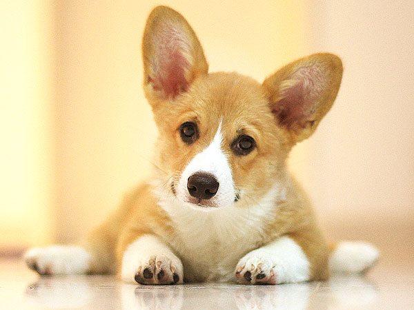 Image result for Dog Breeds