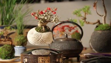 Photo of Amazing! Floating Bonsai Trees Are Real Thanks to Air Bonsai Company
