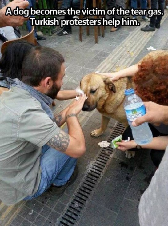 animal lovers acts of kindness 03