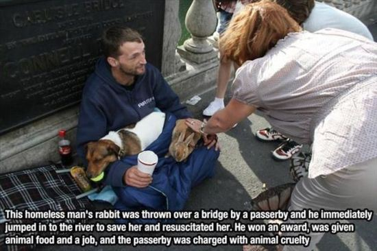 animal lovers acts of kindness 05
