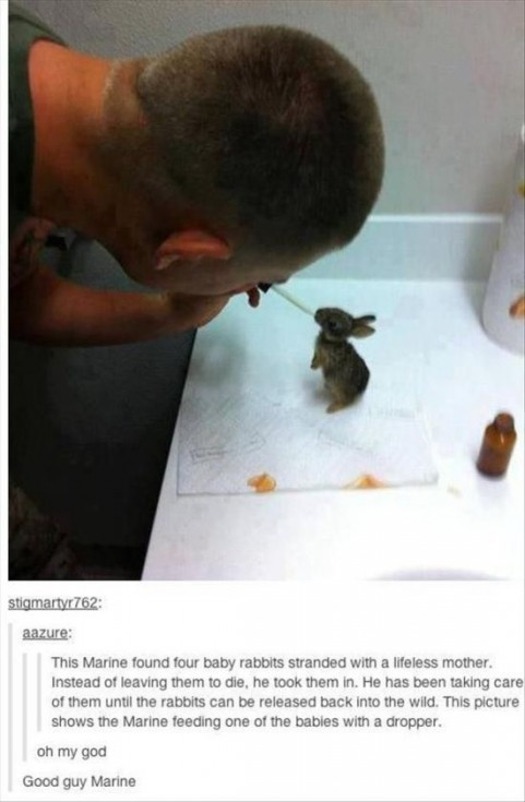 animal lovers acts of kindness 10