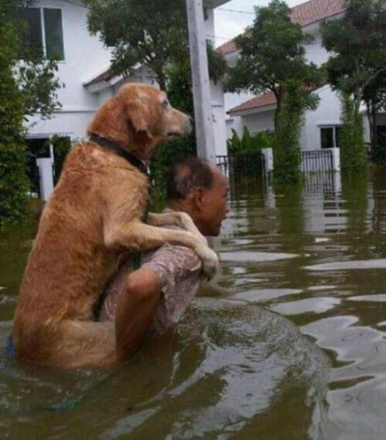 animal lovers acts of kindness 14