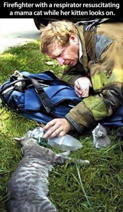 animal lovers acts of kindness 15