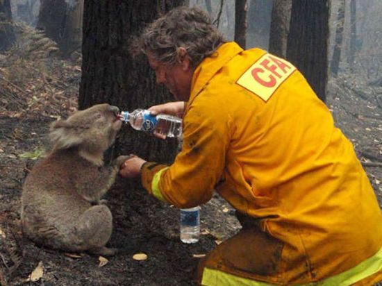 animal lovers acts of kindness 19