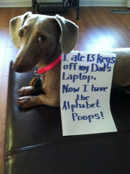 best dog shaming 03
