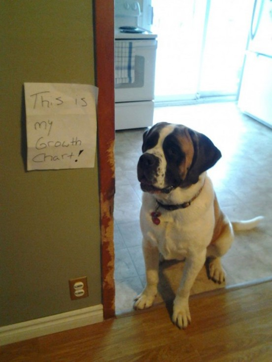 best dog shaming 05