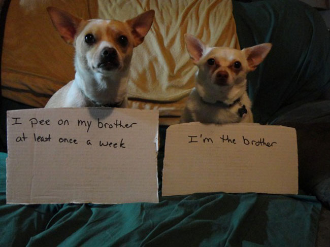 best dog shaming 06