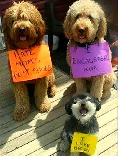 best dog shaming 07