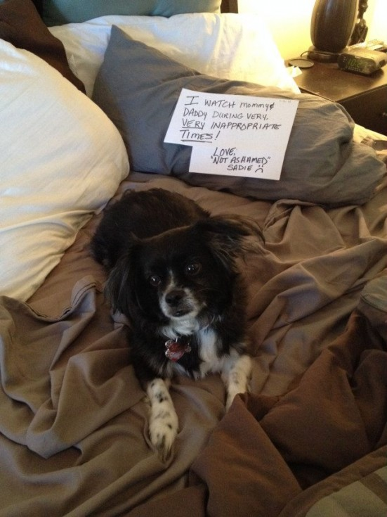 best dog shaming 08