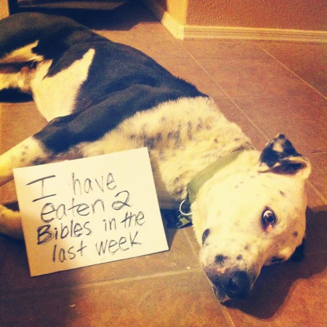 best dog shaming 09