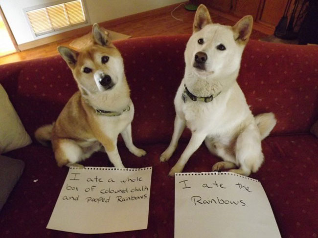 best dog shaming 10
