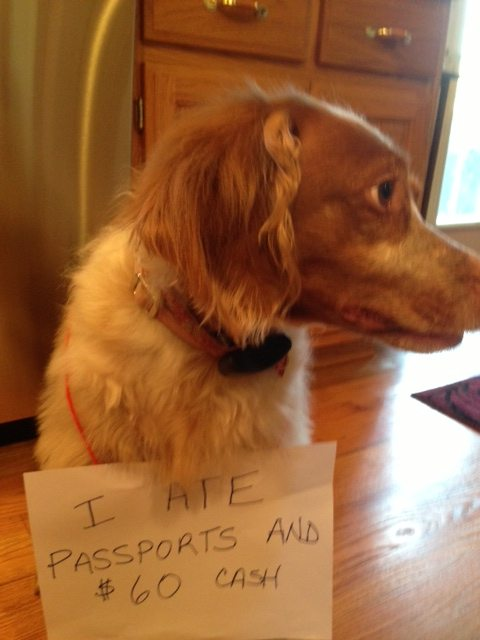 best dog shaming 11