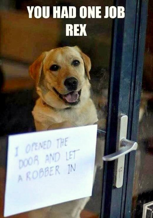 best dog shaming 12