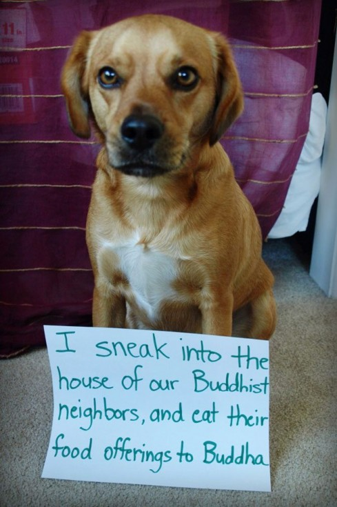 best dog shaming 13
