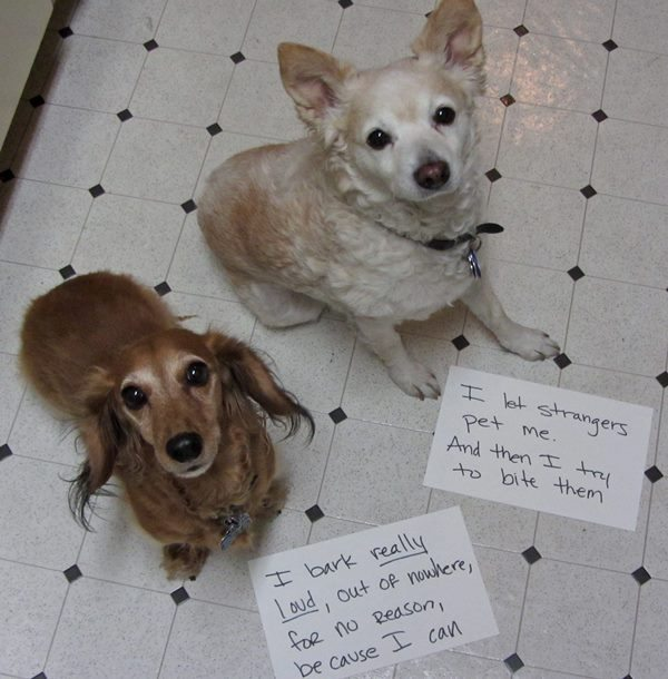best dog shaming 14