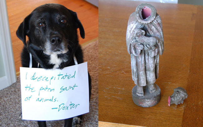 best dog shaming 15