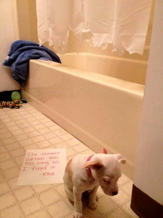 best dog shaming 16