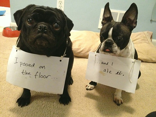 best dog shaming 17
