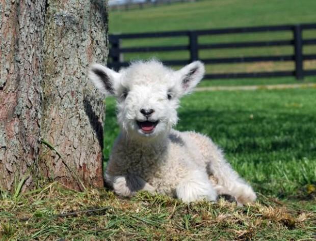 cuteness overload animals 13