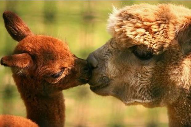 cuteness overload animals 20