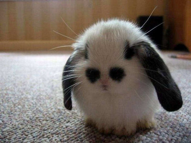 these are the cutest most adorable animals of 2015 everything mixed