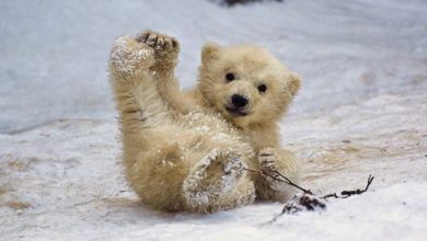 Photo of These Are the Cutest, Most Adorable Animals of 2015