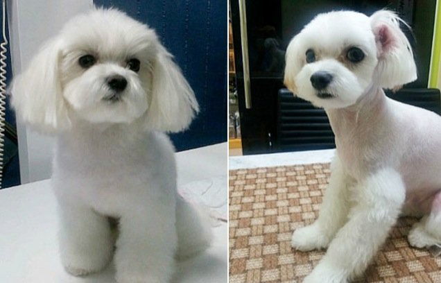 dogs plastic surgery