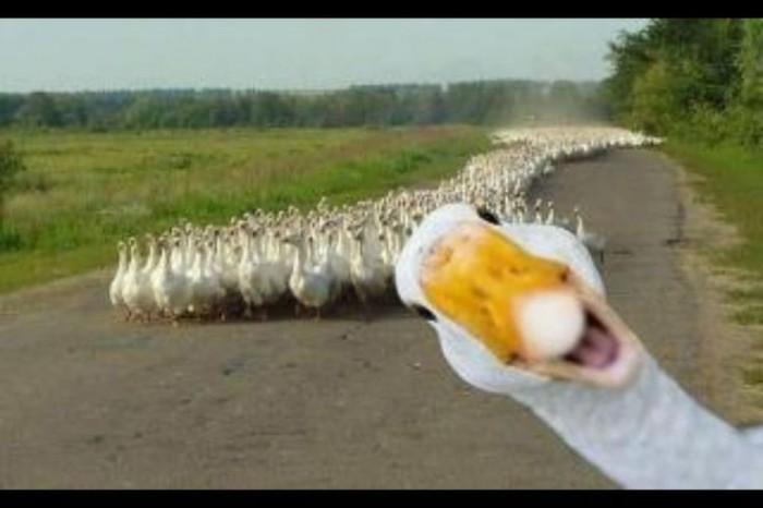 funniest animal photobombs 02