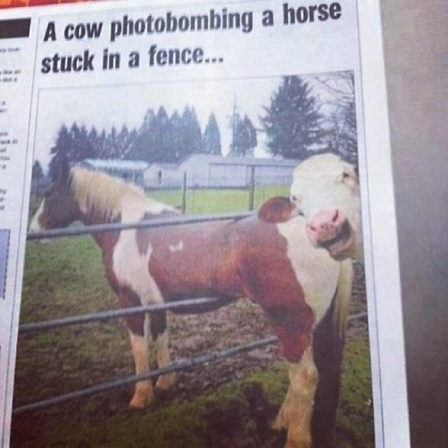funniest animal photobombs 03