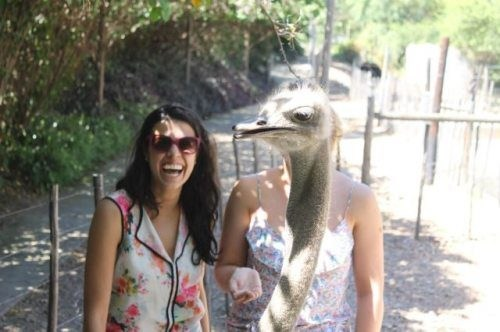 funniest animal photobombs 05