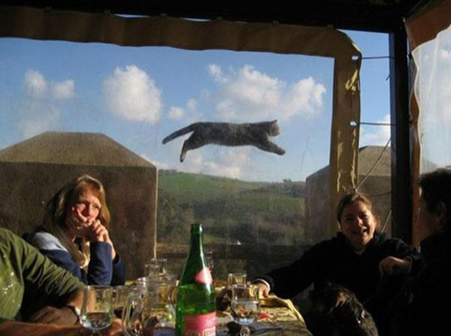 funniest animal photobombs 06