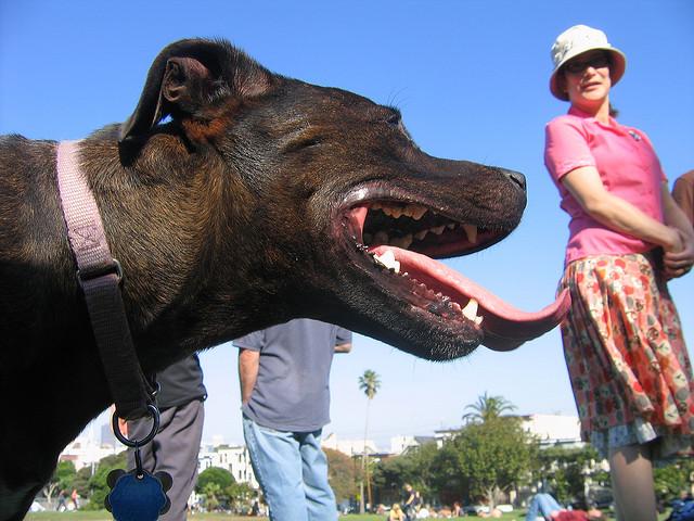 funniest animal photobombs 07
