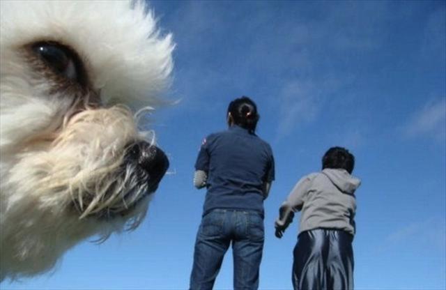 funniest animal photobombs 08