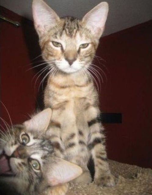 funniest animal photobombs 09
