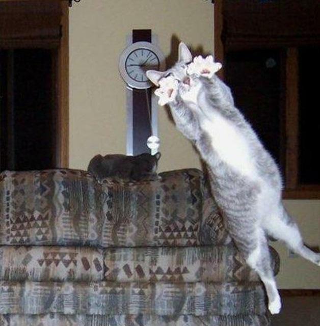 funniest animal photobombs 10