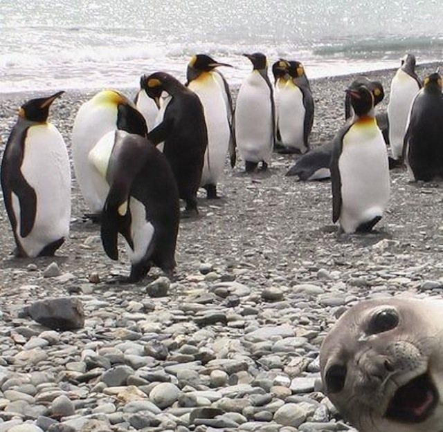 funniest animal photobombs 12