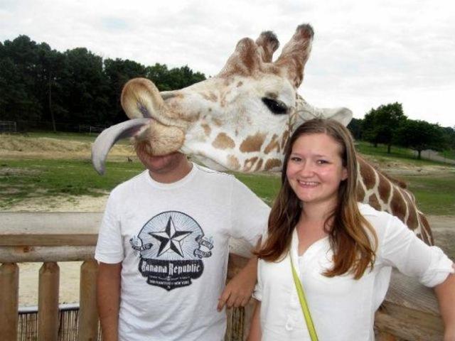funniest animal photobombs 13