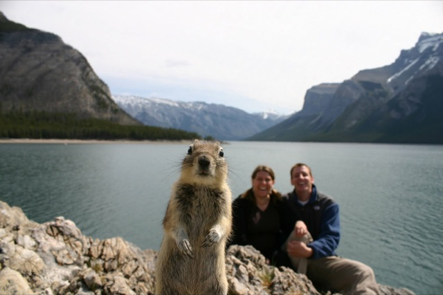 funniest animal photobombs 14