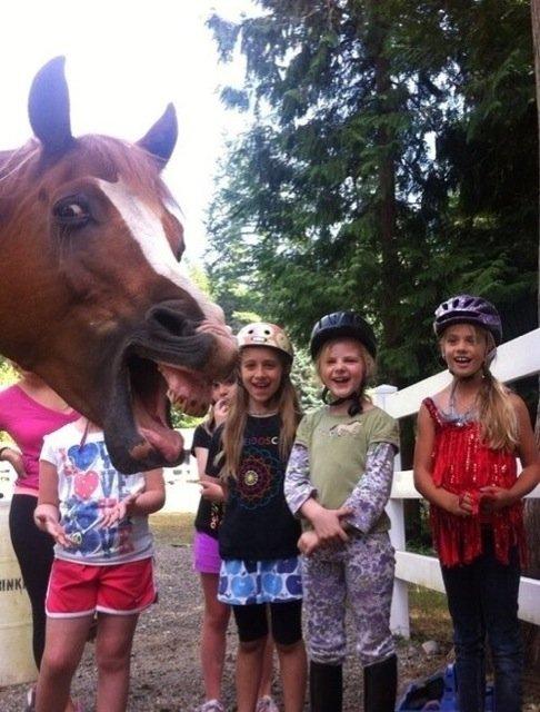 funniest animal photobombs 16