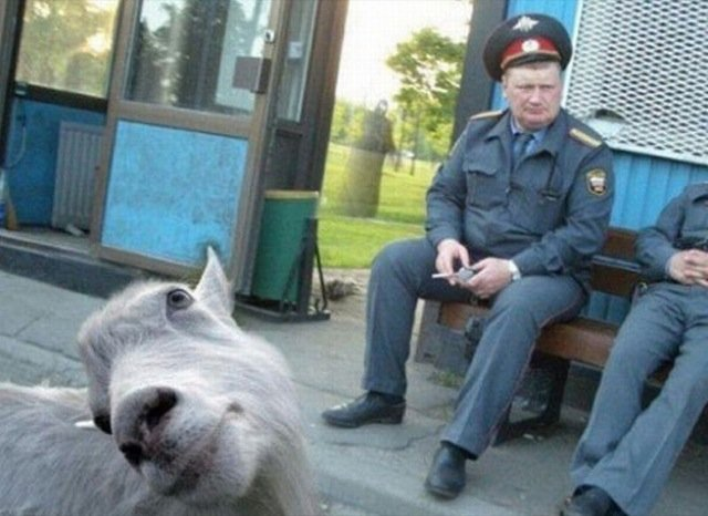 funniest animal photobombs 17