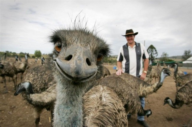funniest animal photobombs 18