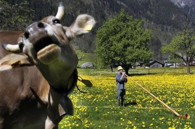 funniest animal photobombs 20