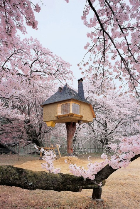 most amazing tree houses in the world 08