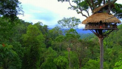 Photo of These Are the Most Amazing Tree Houses in the World