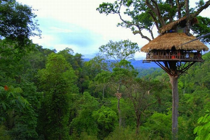 everything mixed these are the most amazing tree houses in