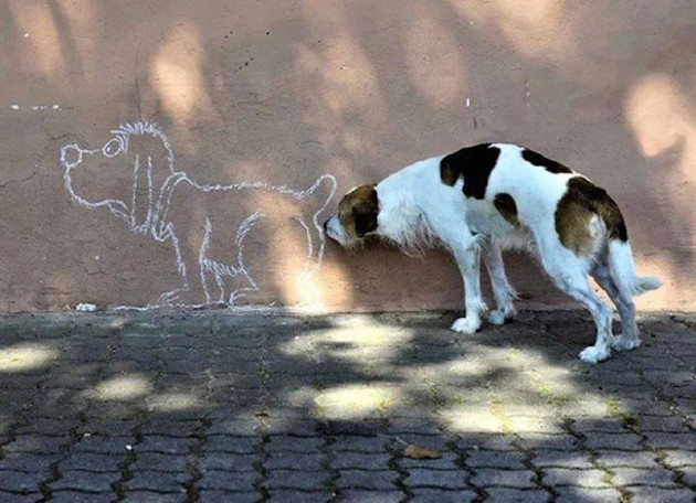 most perfectly timed photos 07