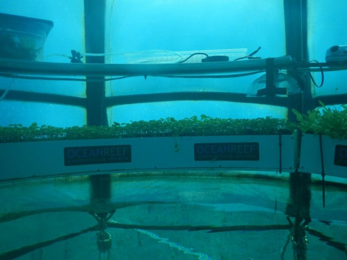 nemos garden underwater farms 04