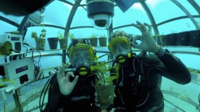 Photo of The Future Is Now: Nemo's Garden Is a Real Underwater Vegetable Farm in Italy that Might Fix World Hunger!