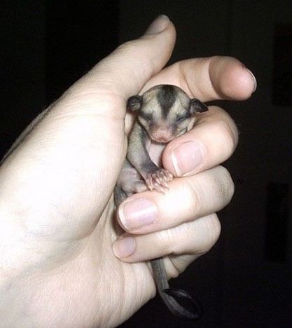 Smallest Cutest Animals In The World Everything Mixed
