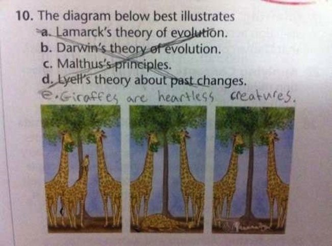wrong but funny test answers 01